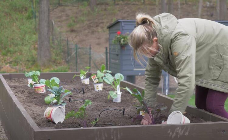 Raised Garden with Irrigation Step 25